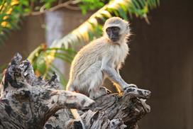 Cheeky Monkeys!