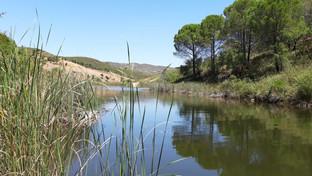 Nearby Swimming Lake