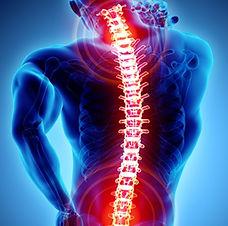 Spine photo.jpg