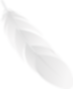 gray_feather2.png