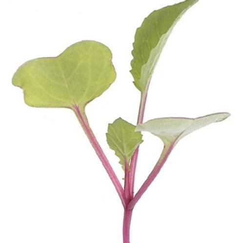 Radish, Hong Vit micro green