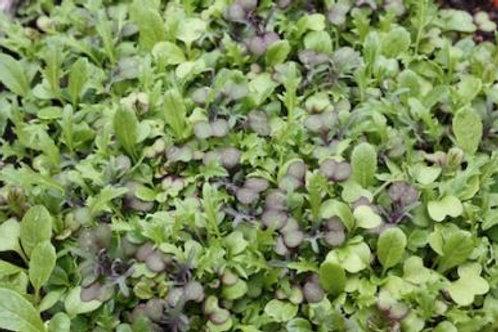 Mesclume Mix micro green