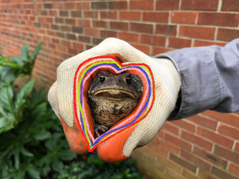 person's hand holding toad with handdrawn rainbow heart around toad. green plants and red brick home in background.