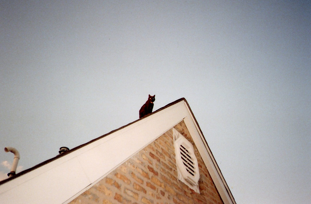 black cat sitting on the roof of urban home and staring at the sunset