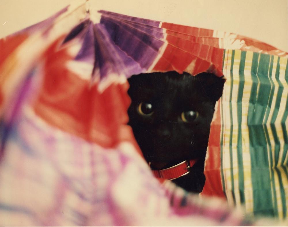 black cat hiding inside colorful paper toy