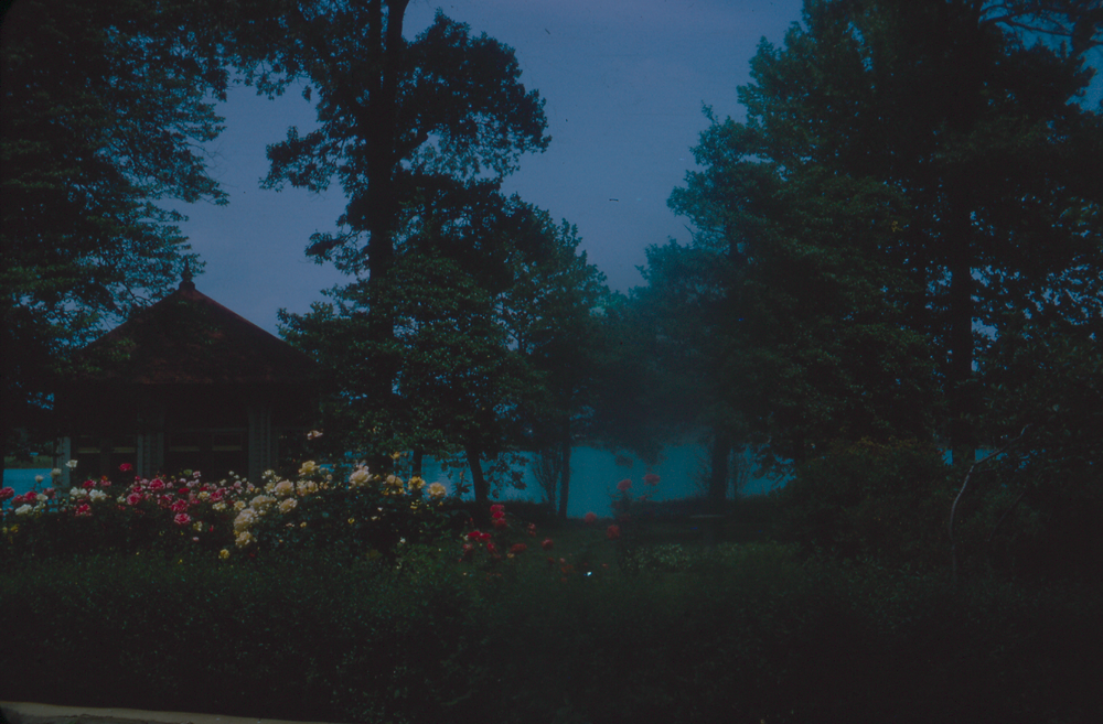 dark blue image of a bed of roses next to trees, a gazebo, and a body of water