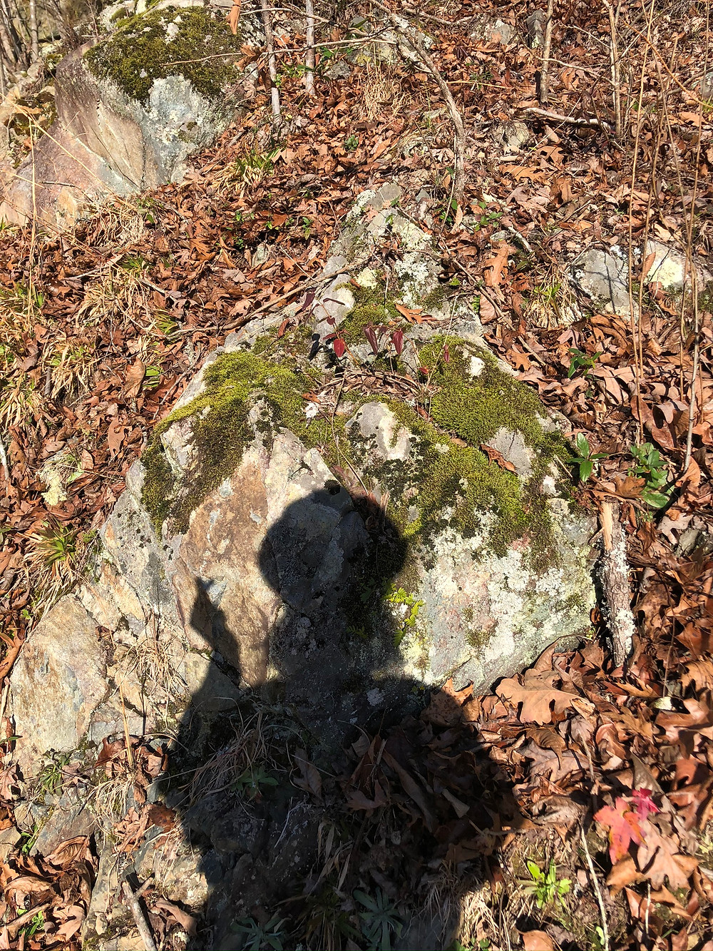 shadow of woman on mossy rock surrounded by brown and orange fallen leaves