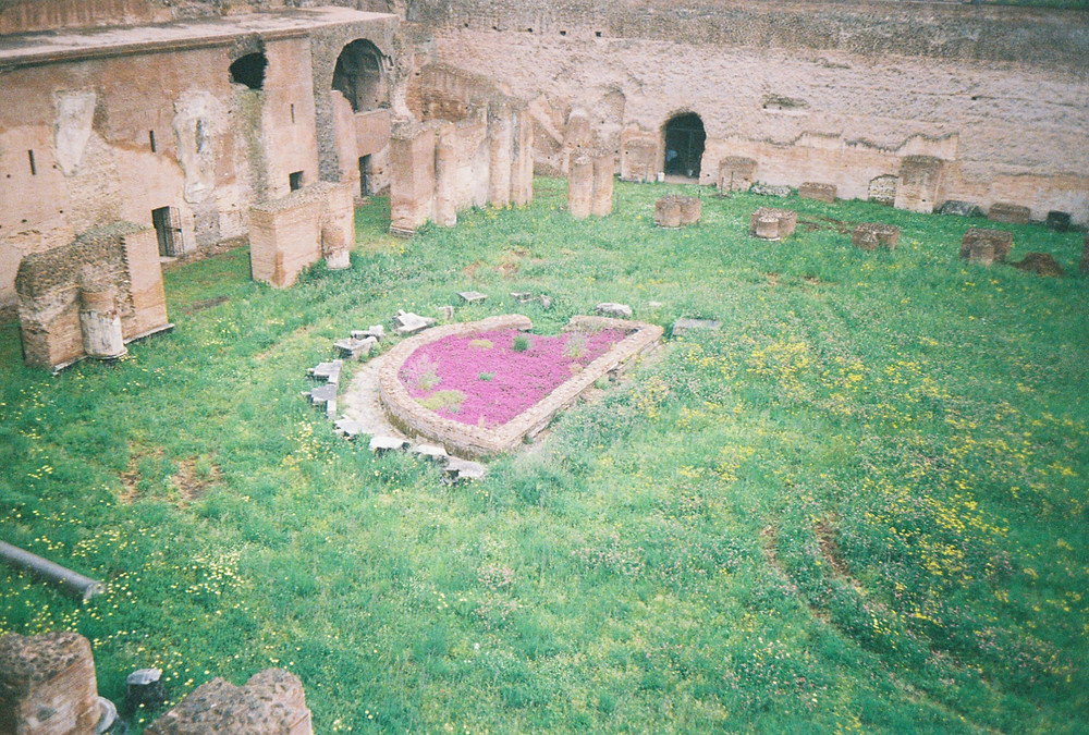 flat Roman ruin with purple flowers growing in side, surrounded by green grass and yellow weeds