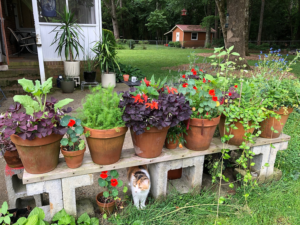 colorful flower pots and a small calico cat on a concrete slab