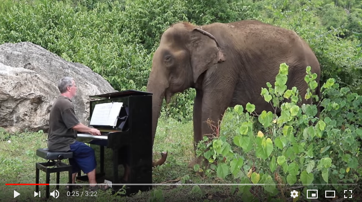 still of youtube video featuring a white man playing on a black piano in front of a large gray elephant