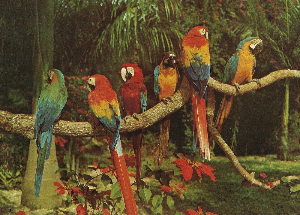 six colorful parrots sitting on branch surrounded by trees and red flowering plants