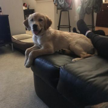 Ella's Pups