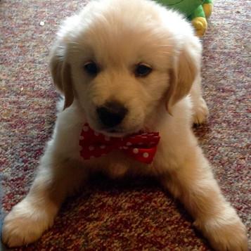 Daisy's pup