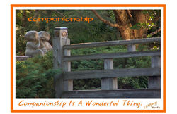 Flash- Companionship.jpg