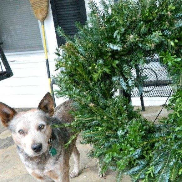 Molly & Wreath