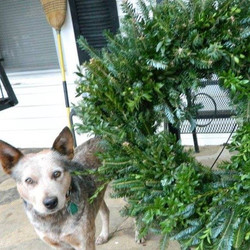 Molly & Wreath