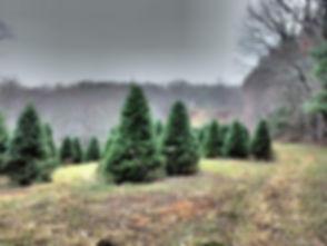 tree field_johnM.jpg