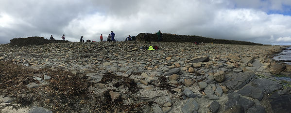 Volunteers rebuilding storm-damaged sheepdyke on North Ronaldsay