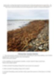 Feb 2020 Newsletter pg 4.jpg