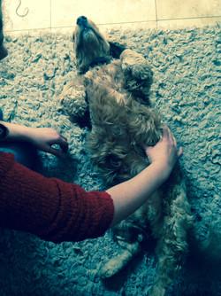 bowen technique for dogs