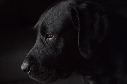dog-pain.jpg
