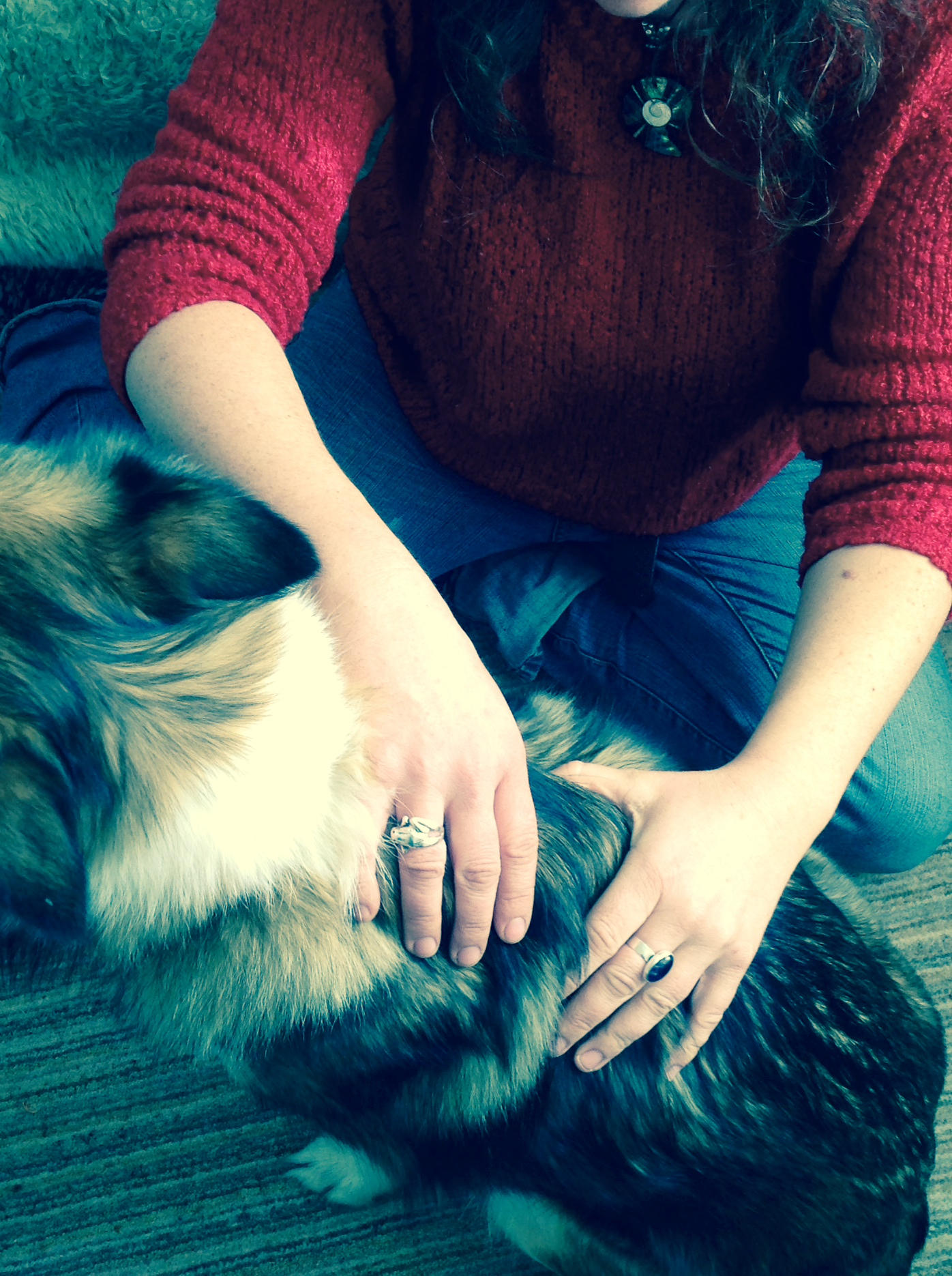 Canine Bowen therapy