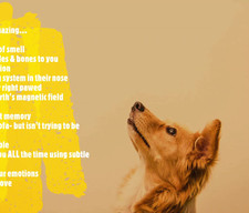 13 amazing facts about your dog you may not know