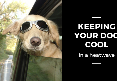 Keeping your dog cool in a heatwave