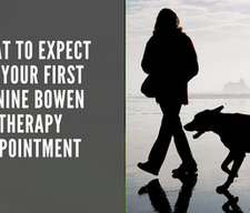 What to expect on your first Canine Bowen Therapy session