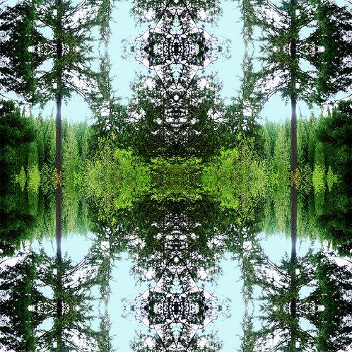 """Arboretum"" digital art file based on original nature photography by artist Justin Potts from Portland's Hoyt Arboretum"