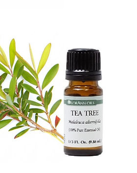 tea%20tree%20essential%20oil%20(2)_edite
