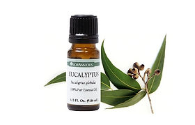 eucalyptus essential oil.jpg