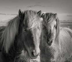 portofolio_Islande_006
