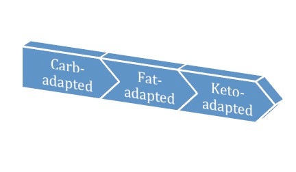 three metabolic states.jpg