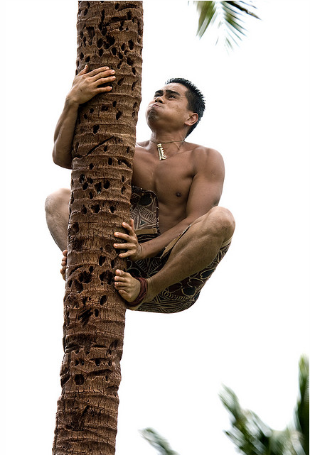 coconut tree climbing.png