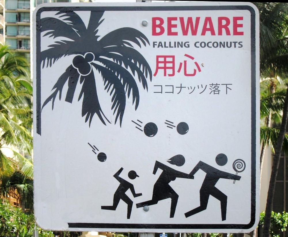 falling coconuts.JPG