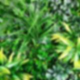 9D7D3FEB-55D0-4BA1-AA18-372E5386FC1D.JPG