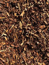 Pine Bark.JPG
