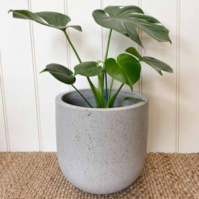 Raw Tulip Pot