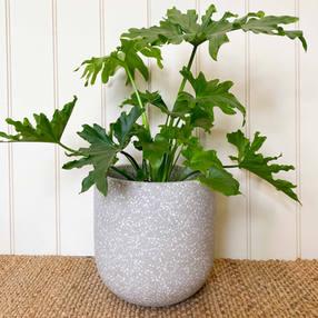 Terrazzo Tulip Pot