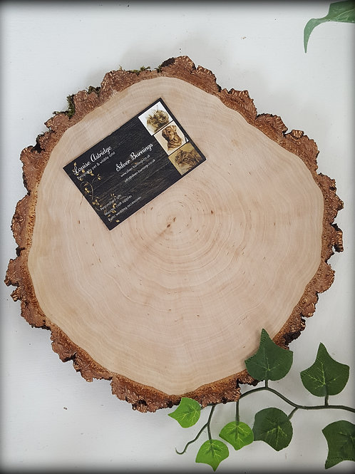 """Extra Large Silver Birch Discs 9"""""""