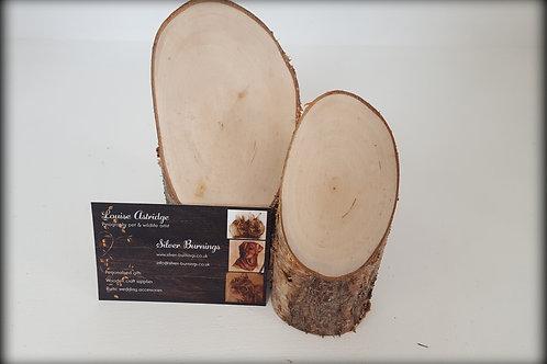 Mini Silver Birch Tree Stumps