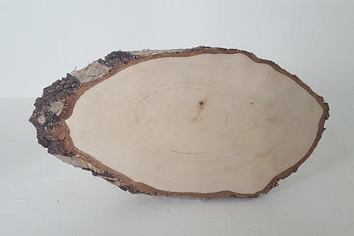 "Silver Birch Tree Slice 12"" x 6"""