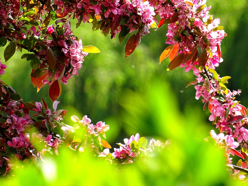 beautiful-bloom-blooming-blossom-381739.