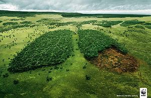 Tree_Lungs_WWF-1556835308669.jpg