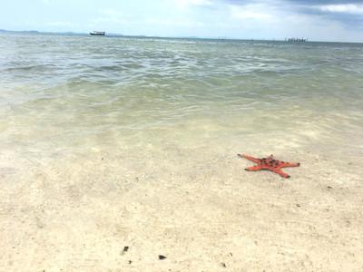 Star Fish Beach à Phu Quoc
