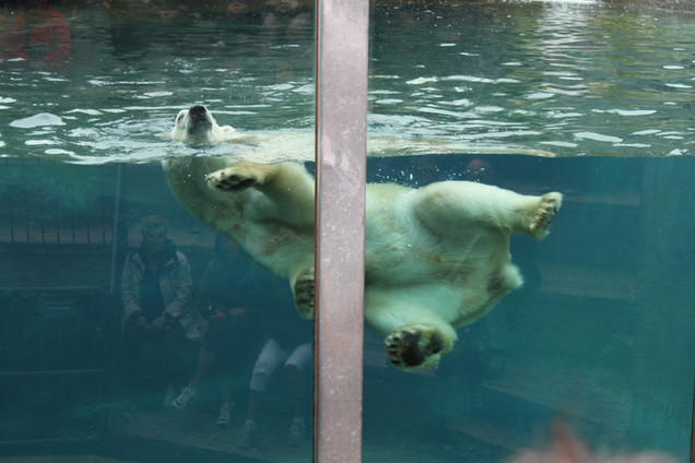 Zoo de Roberval