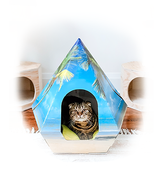 Teepee For Cat, Canada