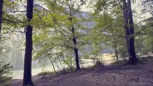 Destination Camping-car en Slovénie