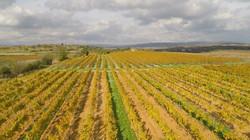 Vignoble en drone - Automne
